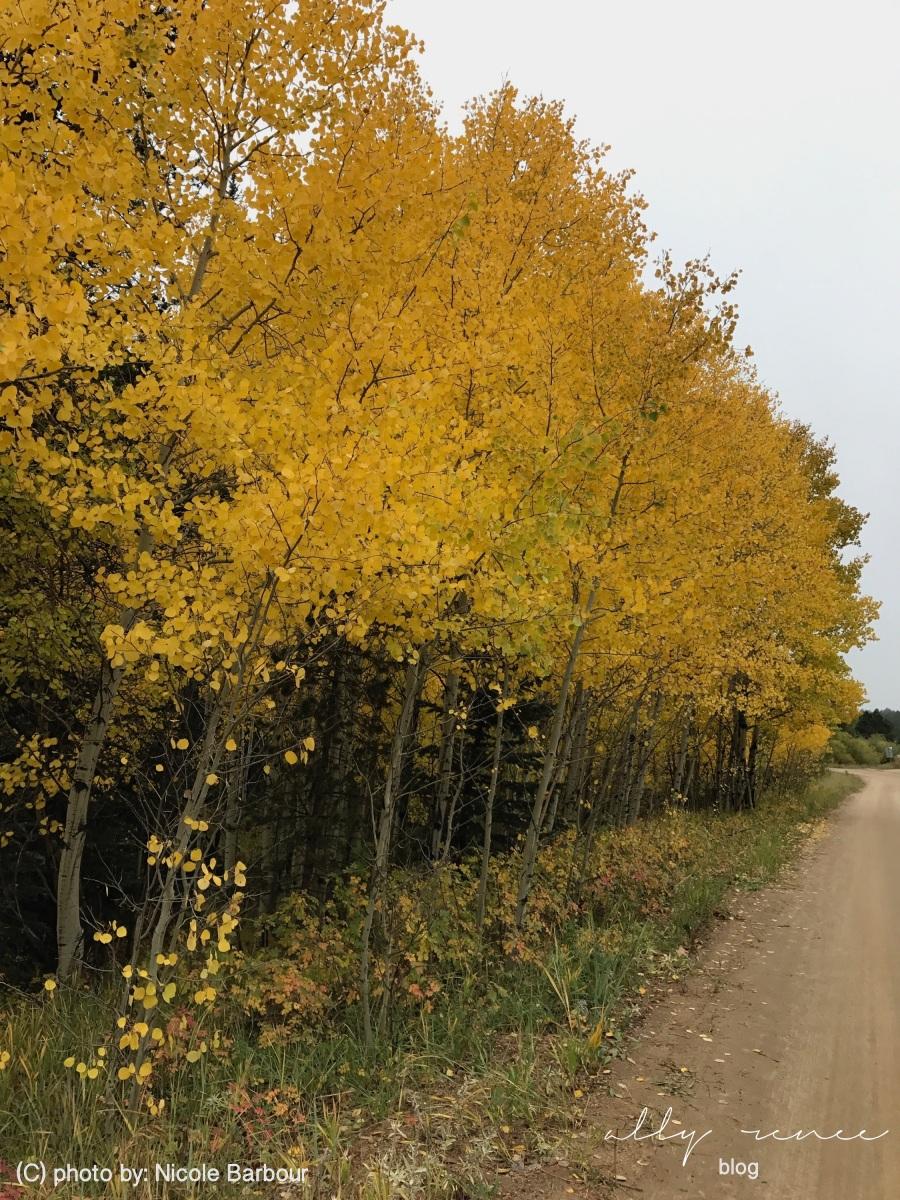 nicole fall pics2