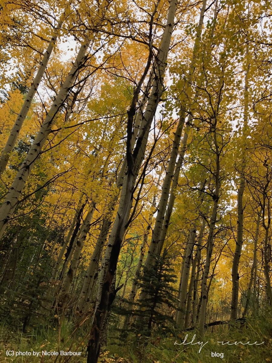 nicole fall picss